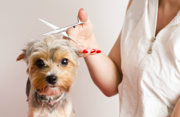 Some of the interesting facts about grooming pets