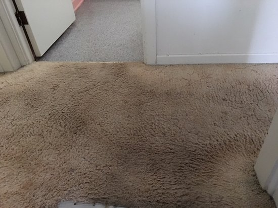 Benefits of carpets for the house